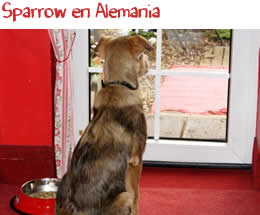 Sparrow en Alemania