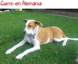Curro en Alemania